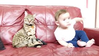 8 Baby and Cat Fun and Fails   Funny Baby Video