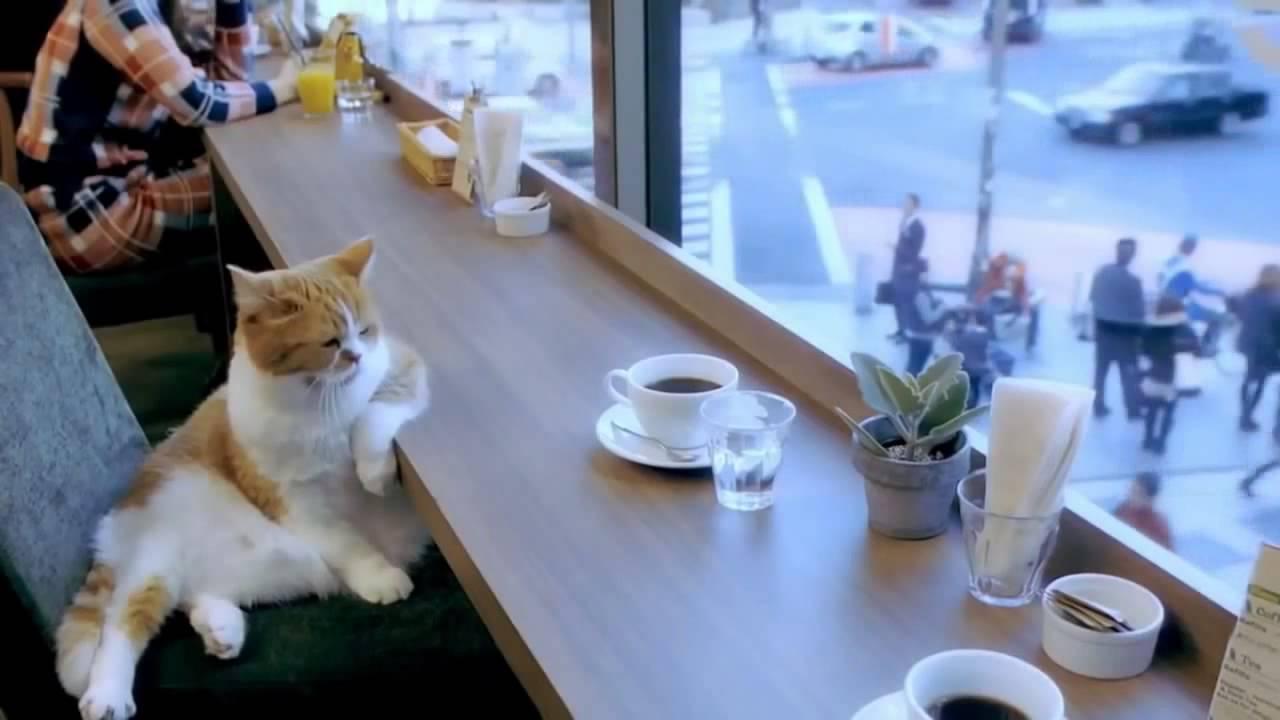 Клип с котами в баре