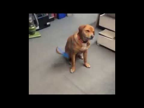 dogs who fail at being dogs