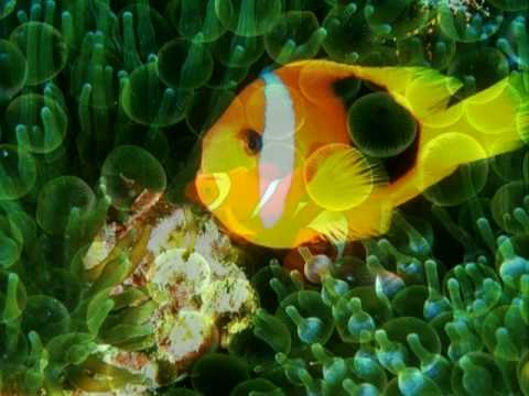 Fotos espectaculares del fondo marino