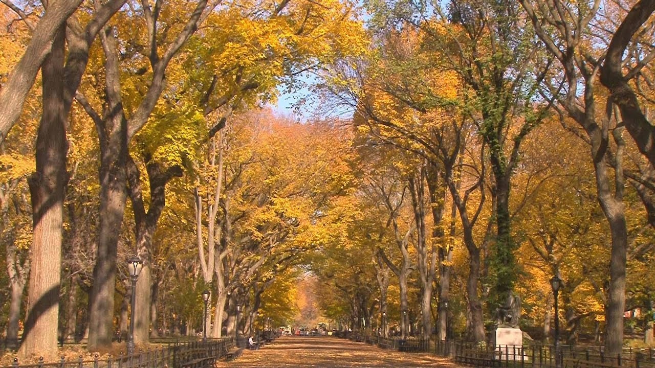 Fall Scenes Desktop Wallpaper Central Park Nyc Peak Fall Foliage November 2011 Youtube
