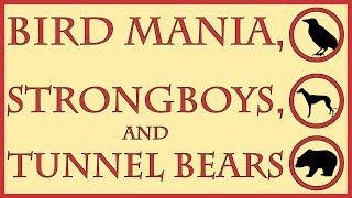 Bird Mania, Strongboys, and Tunnel Bears