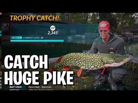 Catch Huge Pike - Grand Union Predator Challenge - Fishing Sim World - Guide