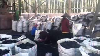 ptklola coconut shell charcoal plant