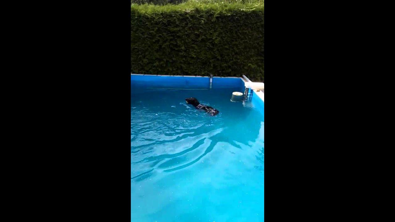 Pooltreppe f r hunde youtube for Hunde pool bauen
