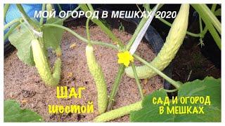 МОЙ ОГОРОД В МЕШКАХ 2020. Шаг N6. Огурцы, Капуста, Свёкла. My GARDEN in BAGS 2020.