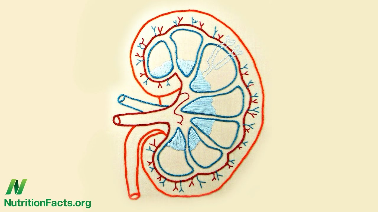 Protein Source: An Acid Test for Kidney Function