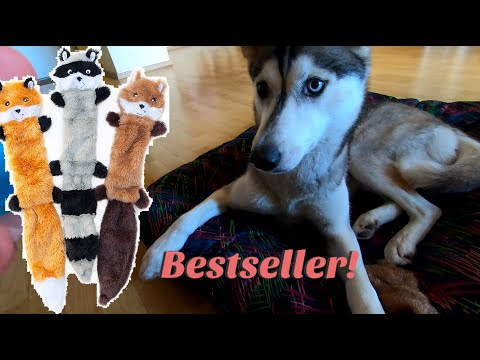 should-you-buy-this-bestseller-dog-toy?-100-second-review