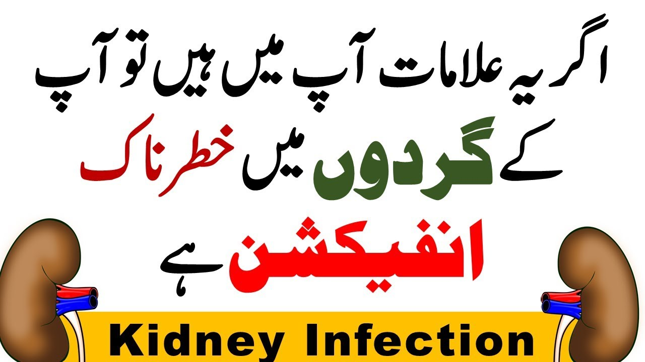Kidney Infection Symptoms Signs Causes Prevention And Treatment In Hindi Urdu 2018 Youtube