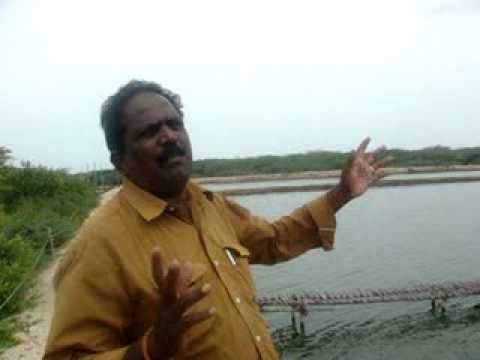 Prawn cultivation farmers experience, Muthupettai