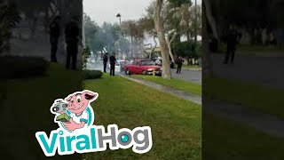 Driver Arrested After Crashing into Palm Tree, Fire Hydrant || ViralHog