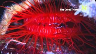 Великие тайны «кораллового треугольника» (трейлер)