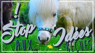 Stop aux idées reçues sur les minis poneys !