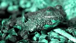 Dominik Eulberg - Die Rotbauchunken vom Tegernsee