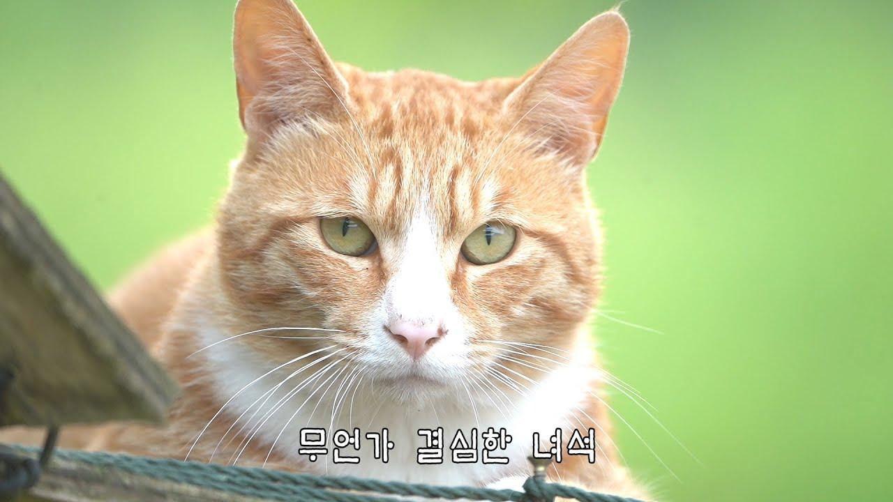 다시 나타난 낯선 고양이, 또 쫓겨나다