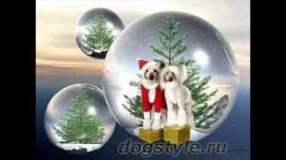 Самые модные вязаные комбинезоны для собак декоративных пород на DogStyle.
