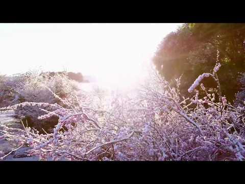 Snowy Morning in Tasmania