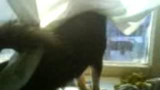 Собака говорун 3