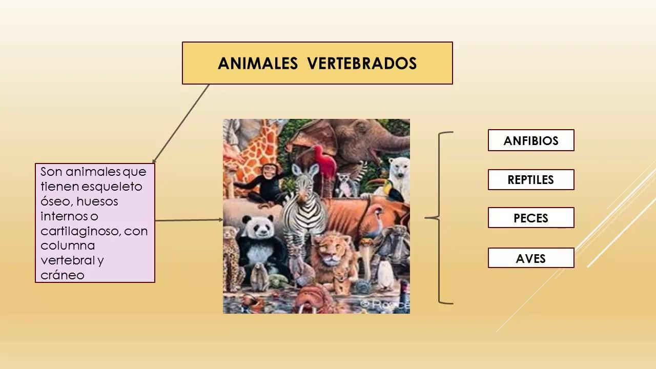 animales que viven dentro de sedimentos