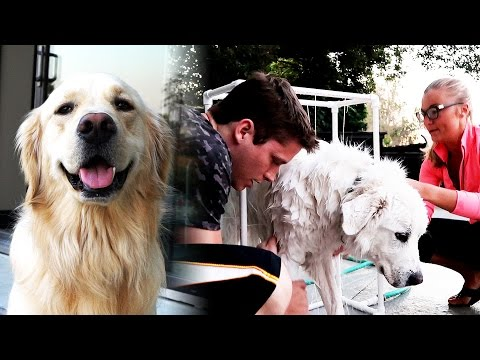 CUSTOM DOG WASHER! (Super Cooper Sunday #90)