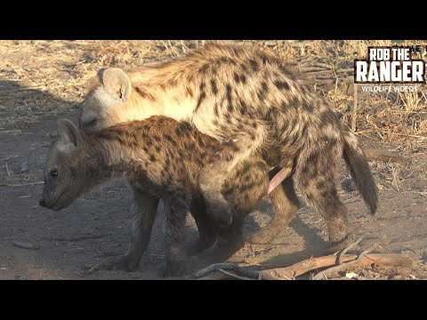 The Other Hyena Den, 5