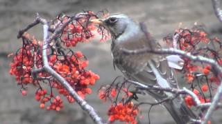 Кошка  охотится (наблюдает) за птицей 16 апреля 2016