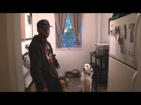 Pointer mix with severe possessive dog behavior - Dog rehabilitation - DCTK9