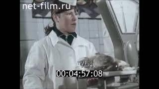 Прудовая рыба круглый год в СССР. Рыбоводство в СССР