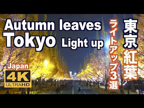 [4K]東京の紅葉ライトアップ  Tokyo Autumn Leaves light up 神宮外苑、大田黒公園、六義園 東京観光 東京紅葉