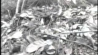 2008鳥類影片合輯 - 深山竹雞