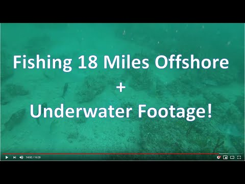 18 Miles offshore from St Petersburg, FL  Cobia, Grouper, Snapper, and Grunts + Underwater Footage