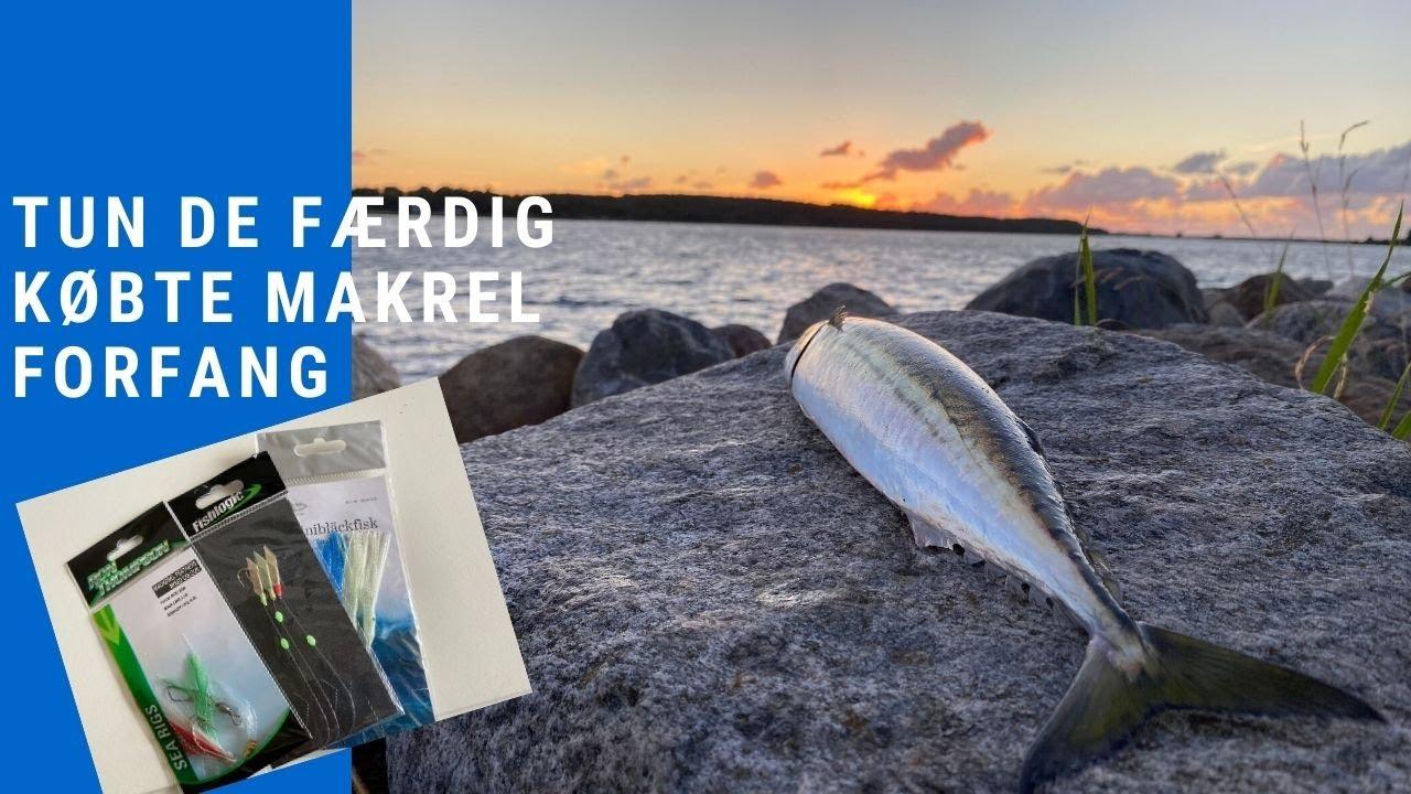 Lav makrel forfang til fiskeri fra land