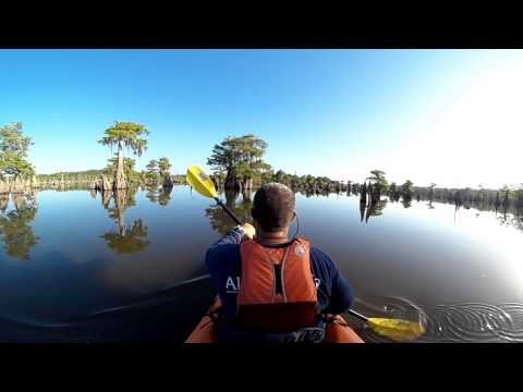 Florida Travel: 360-Degree View of the Dead Lakes