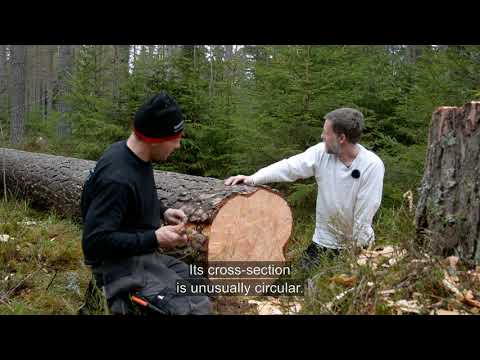 How to turn a freshly-felled 200 year old pine tree into eight radial beams for your medieval church spire