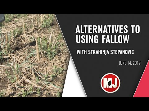 Alternatives to Using Fallow | June 14, 2019