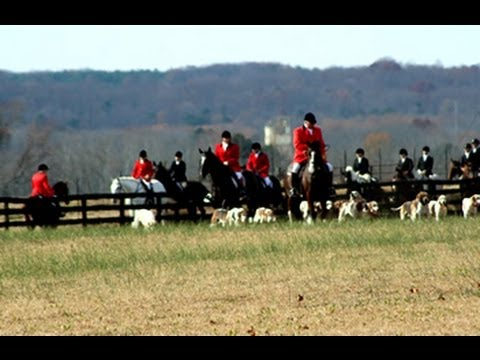 Fox Hunt Photos. Horses. Part 5 Of 5