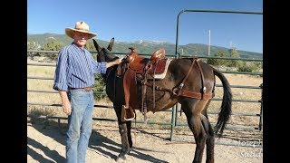 Custom Saddles for Mules  Introduction Video by Joseph Gee Saddlery