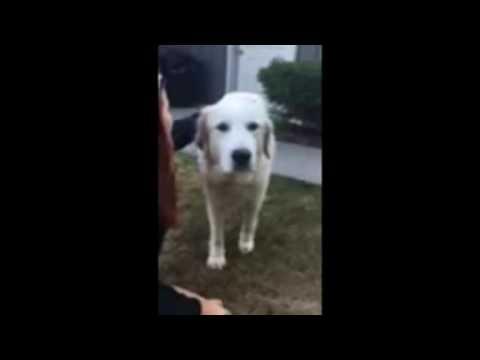 Tilly - Cayuga Dog Rescue