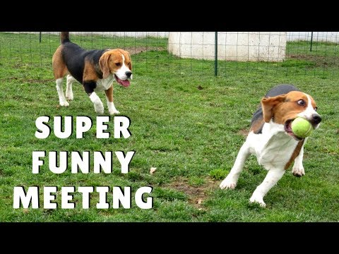 Funny Dogs Meeting