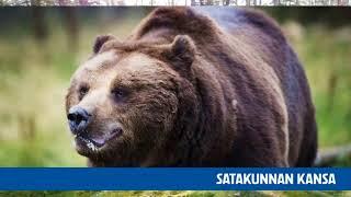 Татьяна. Любимая ягода А.С. Пушкина. Уроки в финском лесу.