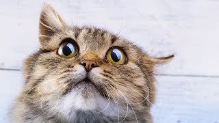 Funny Cats Afraid Of Vacuums - HILARIOUS Animal Video Compilation [NEW HD]