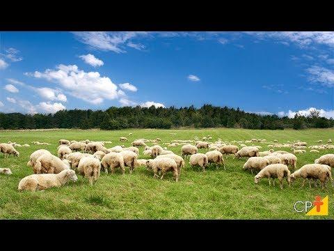 Clique e veja o vídeo Curso Formação e Manejo de Pastagem para Ovinos CPT