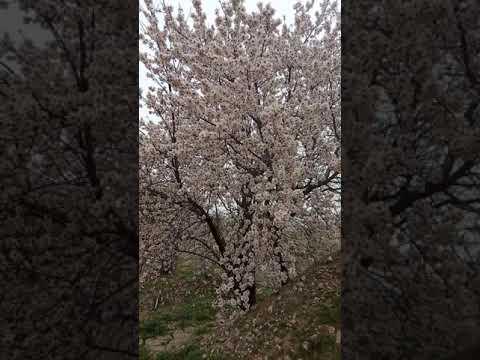 Albinele In 11februarie(2)