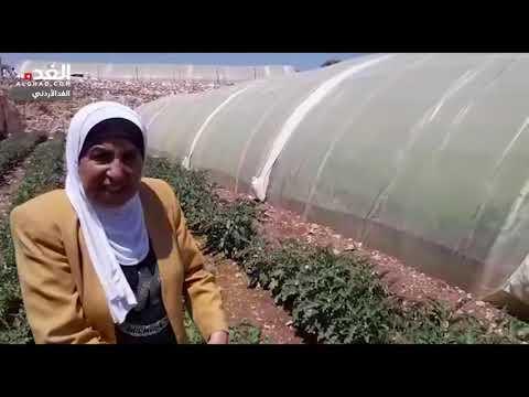 بني كنانة: سيدات يكسرن ثقافة العيب بانشاء مشاريع زراعية مدرة للدخل  - 12:54-2019 / 7 / 11