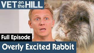 Rabbit Made Babies In Less Than 30 Seconds | FULL EPISODE | S03E16 | Vet On The Hill