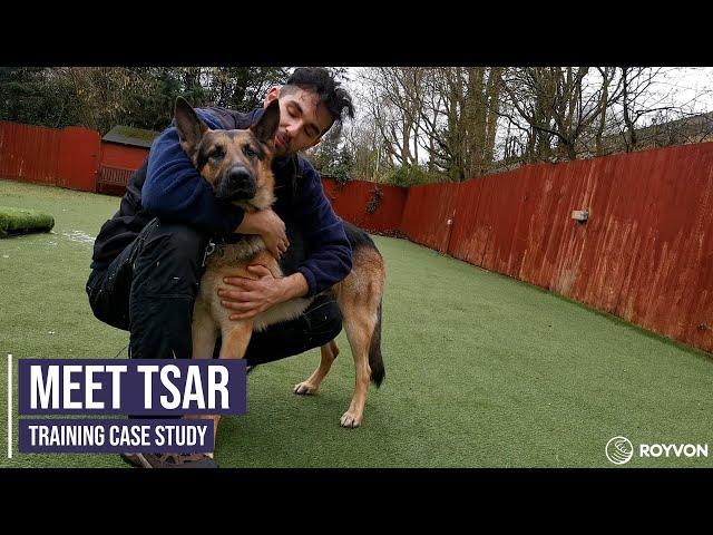 Correcting a German Shepherd's dog to dog aggression