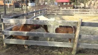 福島復興支援アルパカ牧場に行ってみた!