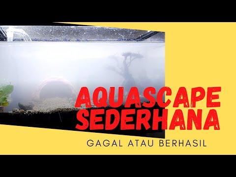 aquascape-sederhana-murah-#perikanancengkareng-#dirumahaja-#aquascapesederhana