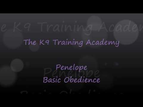 Penelope with her Basic Obedience - The K9 Training Academy