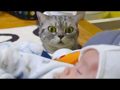 Выкройка одежды для кошек Донских Сфинксов: Универсальная